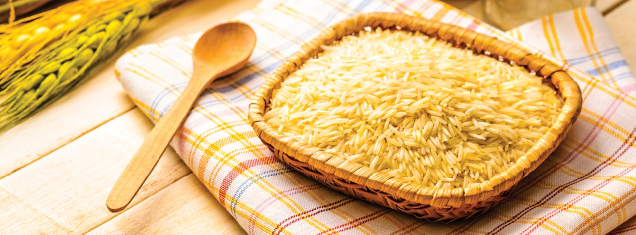 Indian Golden Rice